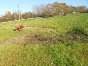 Terra Haus plant bed
